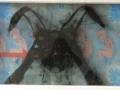 40.Schwarzer Hase / Liebre negra, 2005
